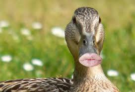 duck-lips